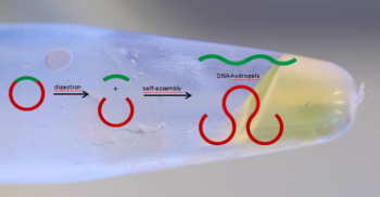 DNA hydrogels from linear building blocks
